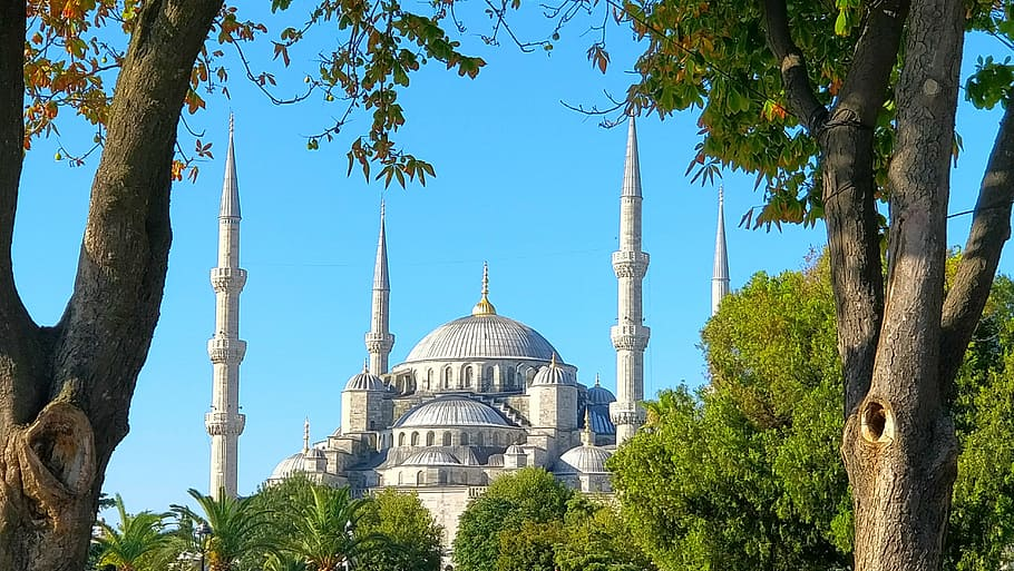 trees-mosque-green-istanbul
